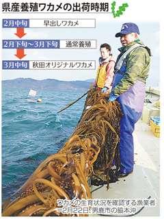 県産養殖ワカメの出荷時期