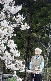 孝男君のために植えた桜を見上げる真田さん。すぐ隣には、家族で建てた孝男君の慰霊碑がある