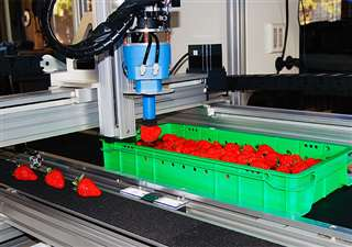 繊細な力加減でイチゴ1粒を収穫箱から吸引するロボットハンド(農研機構提供)