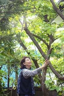 庭の木々を見上げる平島さん。住み慣れたわが家の未来を、常日頃考えている
