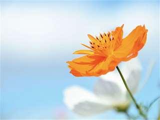 母は生前、オレンジ色や黄色、明るい色の花が好きだった