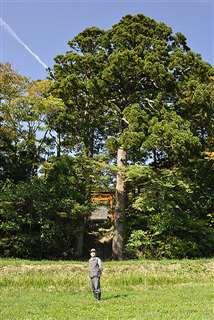 秋田市下浜羽川の鎮守の森「八幡神社」