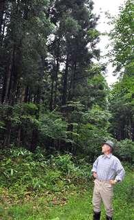 杉と広葉樹がバランス良く交じる混交林。緑がまぶしい=今年7月