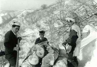 出稼ぎに行った岩手県宮古市の山中で作業する仲間たち=昭和38~39年