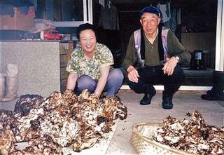 父金作(右)が生前、山で採ってきた大量のトンビマイタケ。母英と=20年ほど前