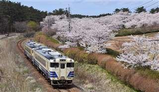 御所の台ふれあいパークのソメイヨシノは五能線からも楽しめる=八峰町、4月22日撮影