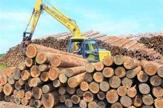 白神木材流通センターに積み上げられた秋田杉の原木=10日、能代市久喜沢