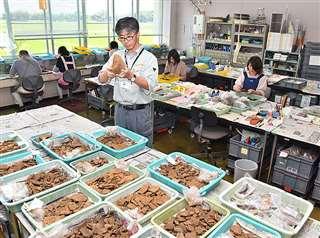 県埋蔵文化財センターの一室で、県内の遺跡から出土した遺物を整理する吉川さん(中央)ら