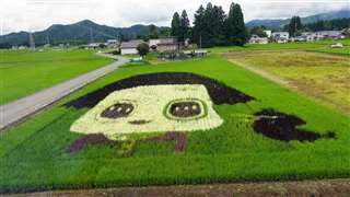 角館~羽後太田駅間に描かれた田んぼアート。NHKのバラエティー番組のキャラクター、チコちゃんとキョエちゃん=7月23日午前9時53分ごろ