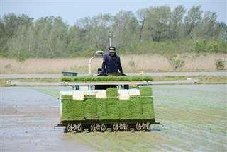 フィールド教育研究センターなどが行った自動操縦田植え機を使った田植え=昨年5月