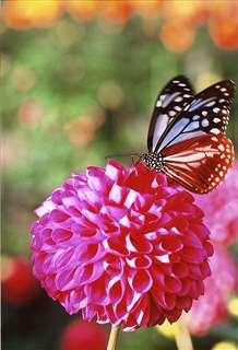 「蝶の楽園」=平成27年秋撮影