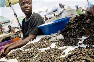 コンゴ(旧ザイール)の市場で、乾燥させた芋虫を売る女性(国連食糧農業機関提供)