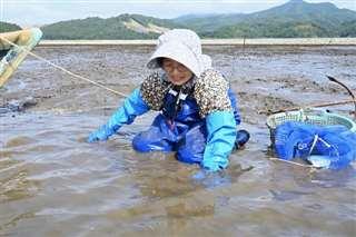 北上川河口の浅瀬でシジミを採る只野さん。震災前はヨシ原が広がっていたという=昨年6月4日