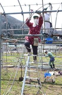 パイプハウスの再建に取り組む高橋さん=16日、横手市山内土渕