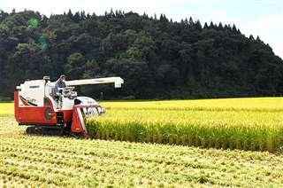 秋田市内で進む稲刈り作業。2021年産米の概算金が大きく下落し、営農への影響が懸念される